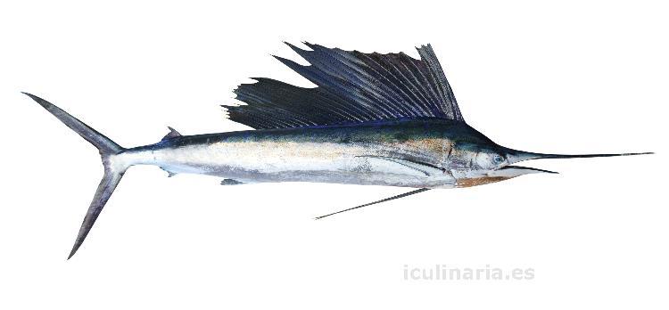 Imagenes del pez espada imagui for Pez espada fresco